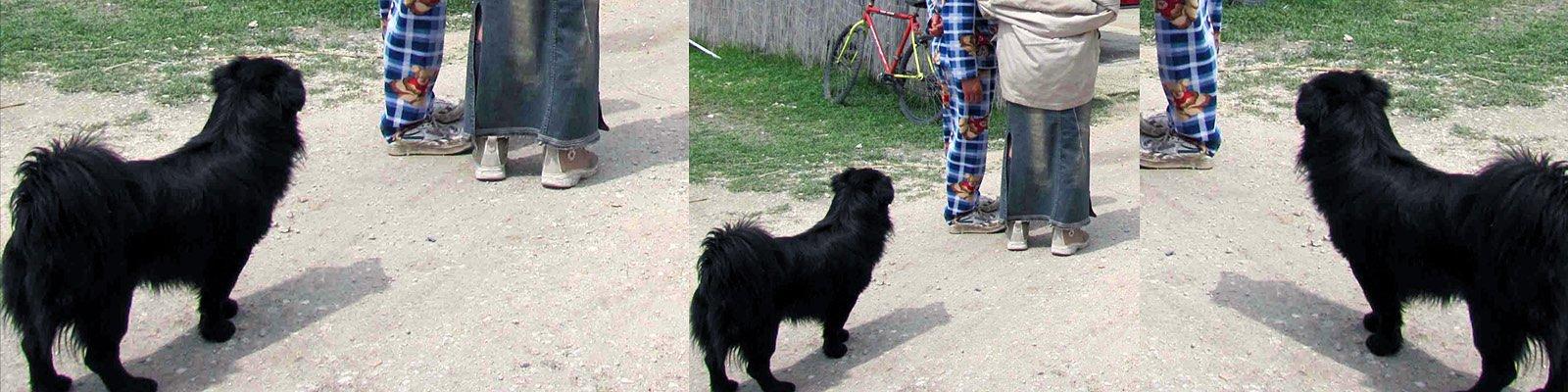 cagnolino zingaro